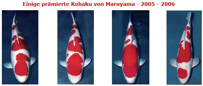 Maruyama-4-Kohaku.png